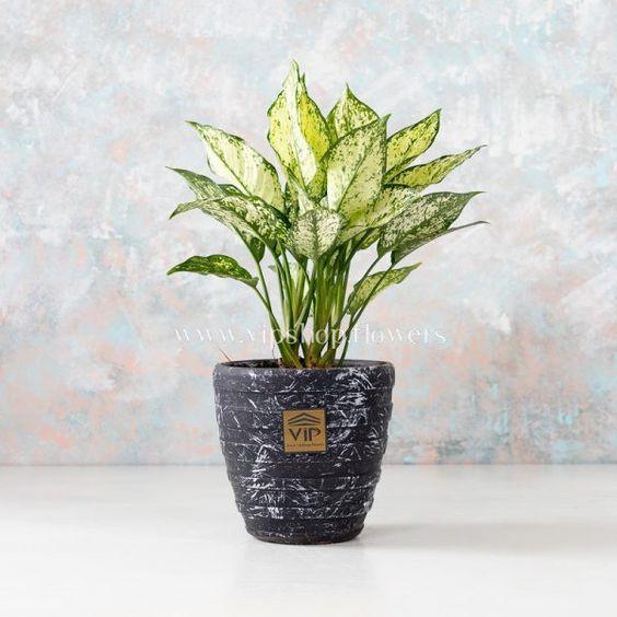بهترین گل های آپارتمانی سرسخت و زیبا